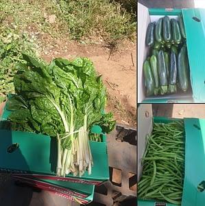 Mixed Vegetables Box